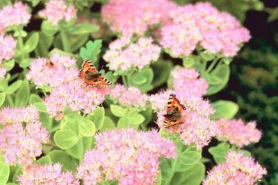 Identification Floraison Succulent Plant