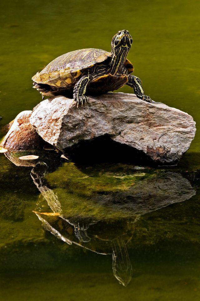 Comment donner une tortue un bain